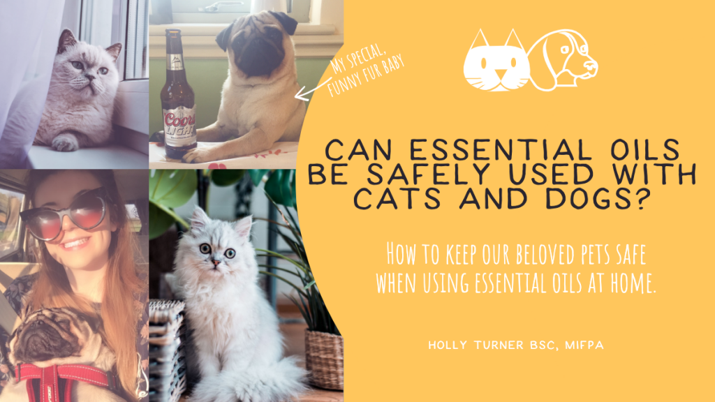 can essential oils be used with cats and dogs